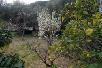 Casa semindipendente con giardino - 333165